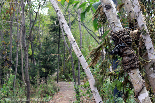 Rope tied around tree in forest