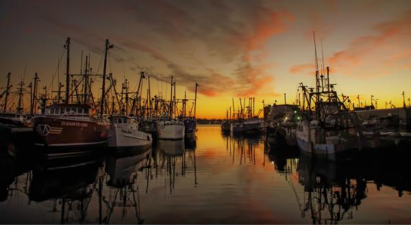 Fishing Vessels in Dock