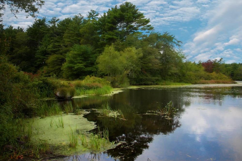Carver Pond, MA