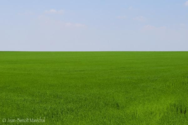 Le désert vert