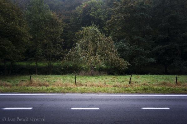 La route et le pommier