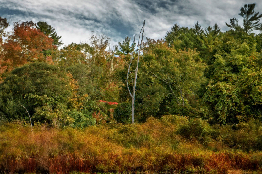 Norwell Reservation Massachusetts