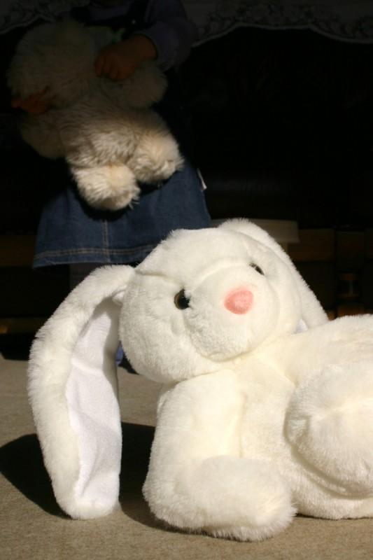 Super cool bunny