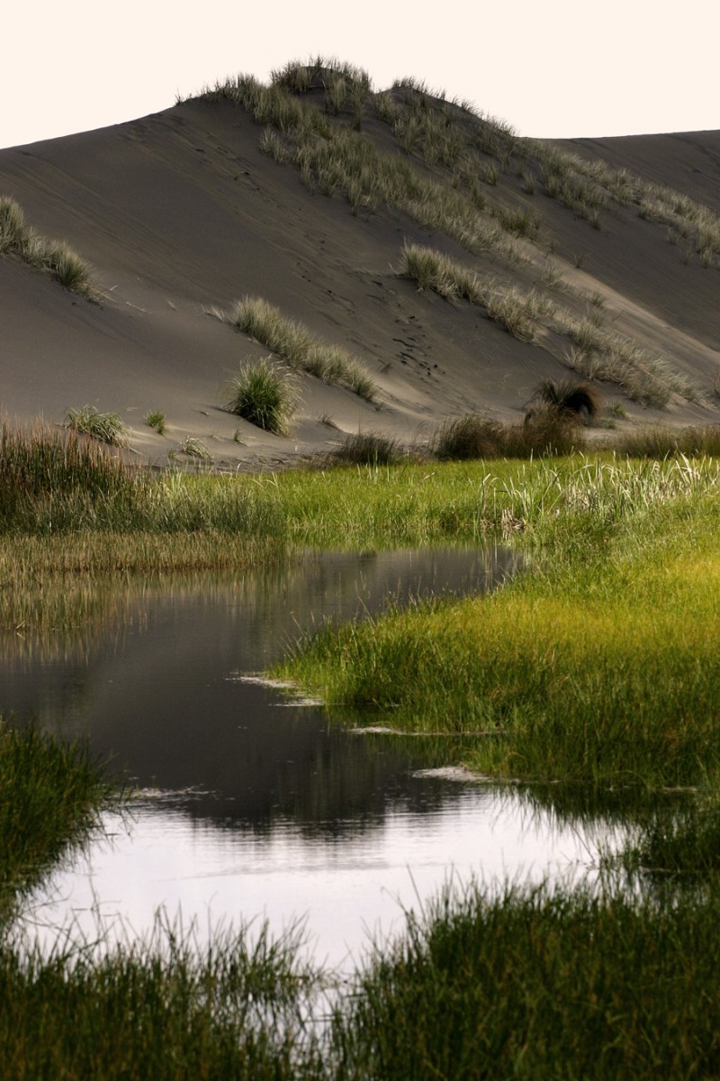 Waitakere swamps and dunes
