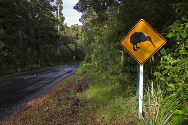 Watch out for Kiwis on the road