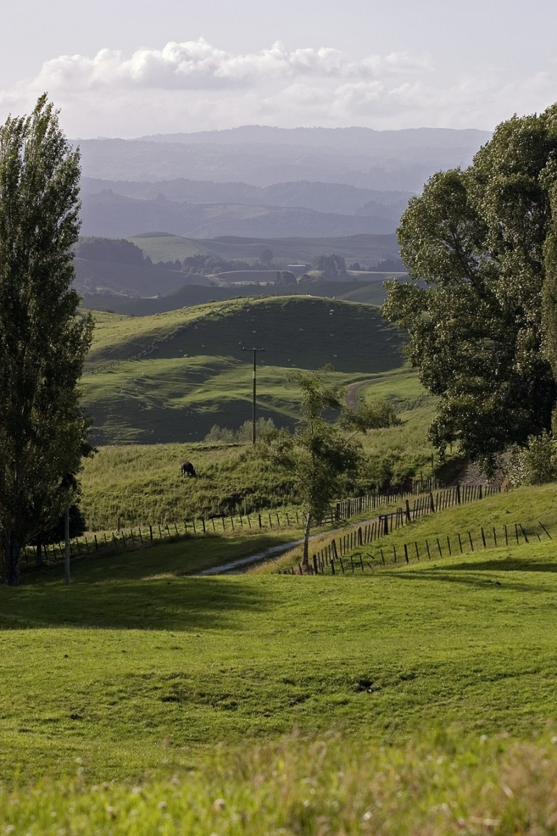 Rolling hills of the Waikato region, New Zealand