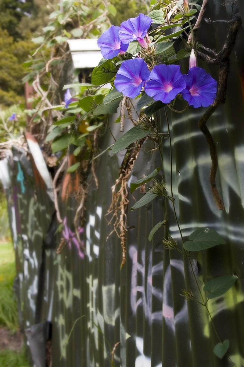 Nature vs Graffiti