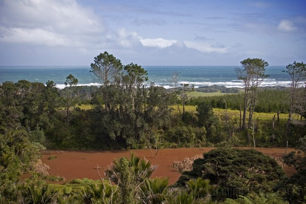 Red swamps at Muriwai