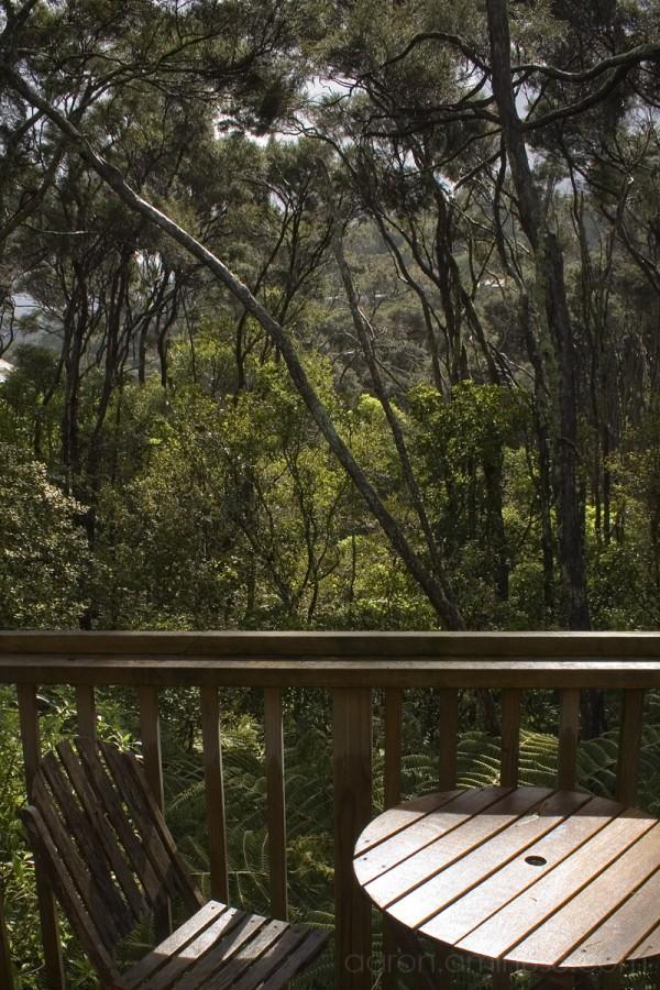 Overlooking our backyard