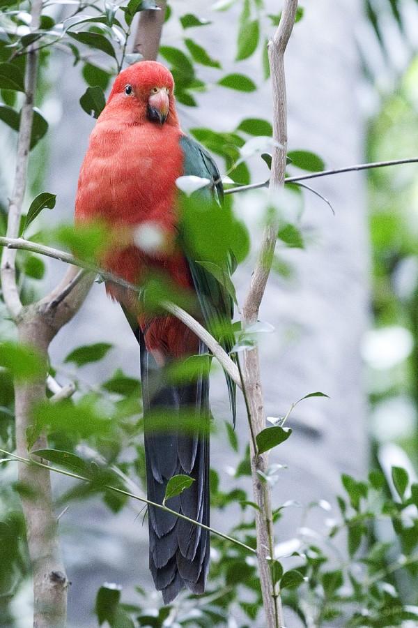 Exotic bird vertical