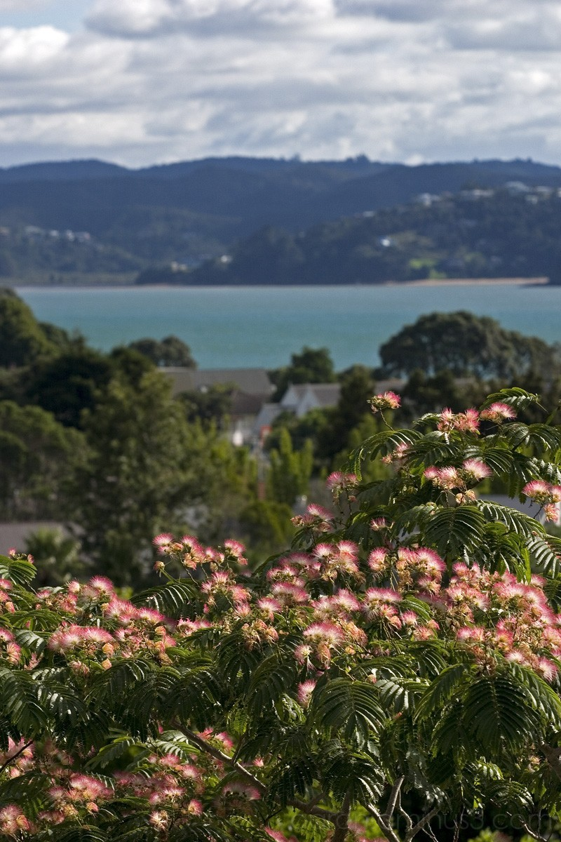 Pink in bloom at the Bay of Islands