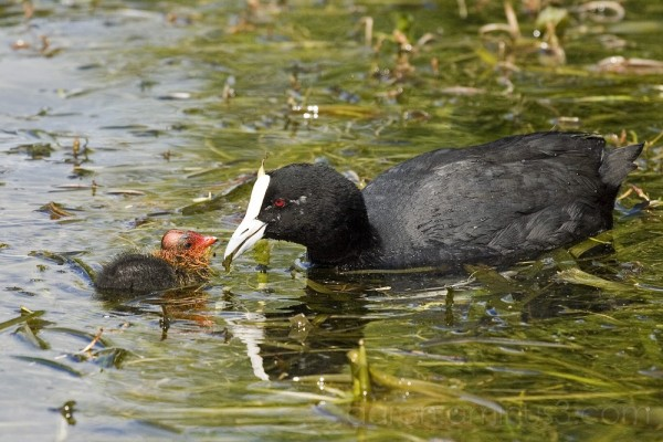 Mother bird feeding her baby