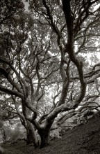 Overhanging trees