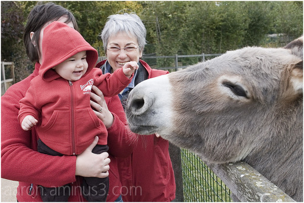 Girls in red with donkey