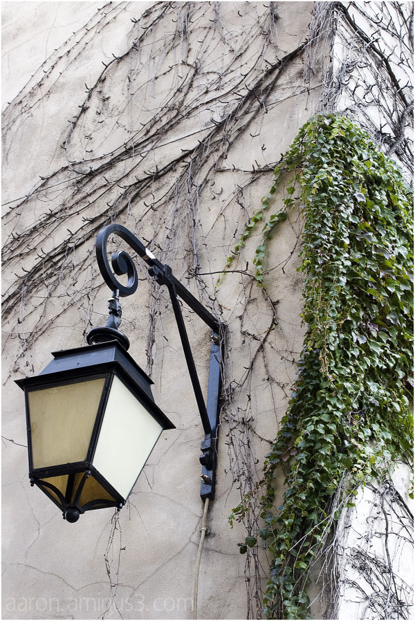 Lamp on wall with vines