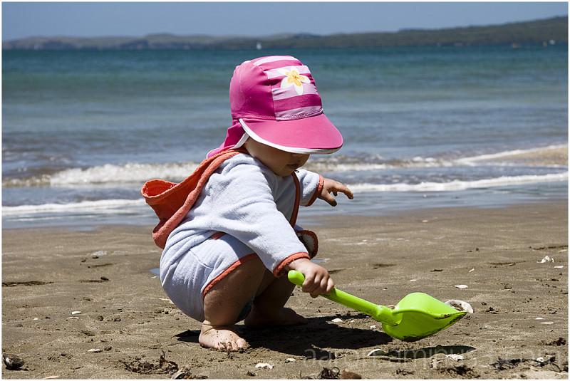 Solen digging in the sand