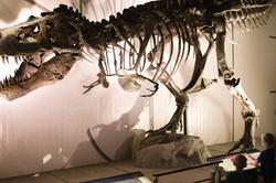 A T-rex named Sue