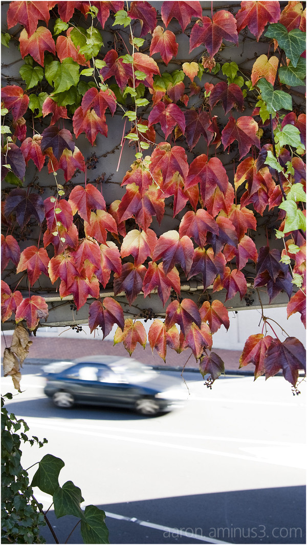 Leaves changing, car driving