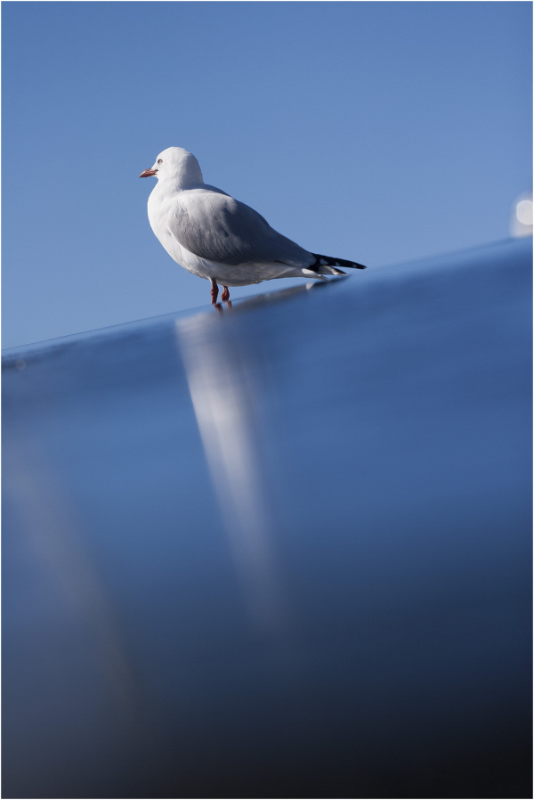 Seagull on the water wall