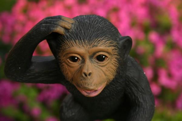 the pink monkey flower