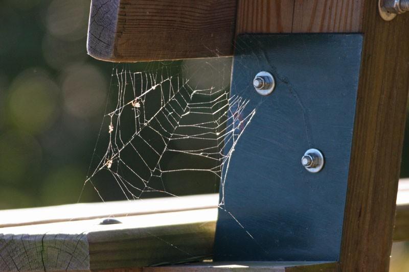 A Wispy Web