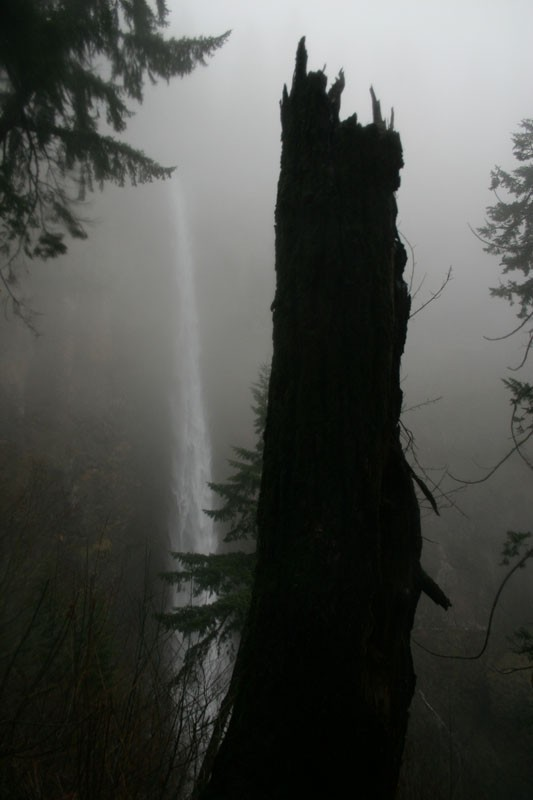 Falls through the fog