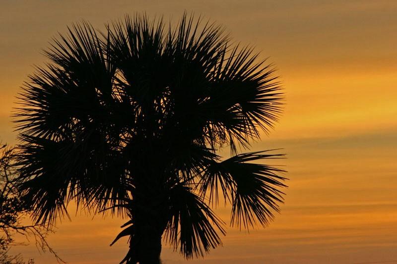 Sundown in Spikey Tree Town