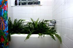 Fern Bath