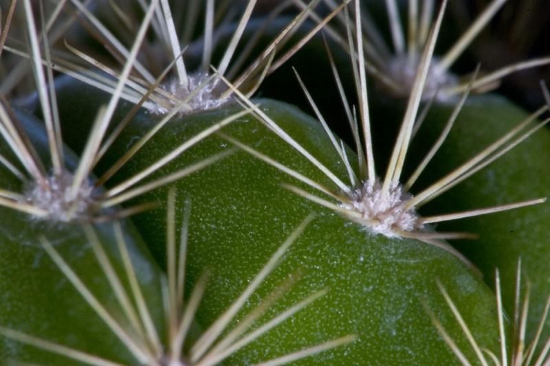 Cactus Week (Part IV)