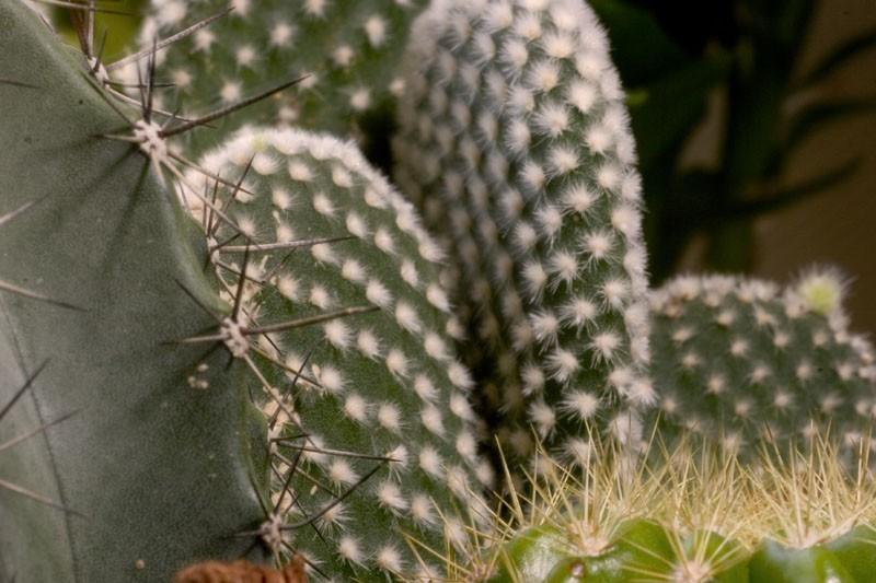Cactus Week (Part V)