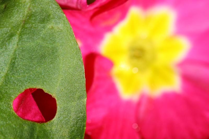 Cut Out Sun Burst Flower