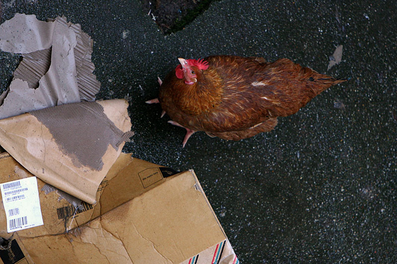 Rooster Box