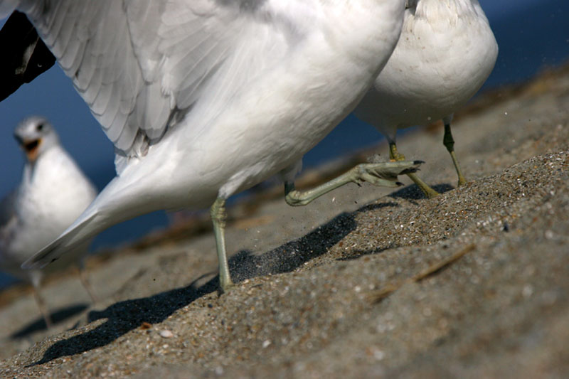 Seagull Feet on Sandy Beach