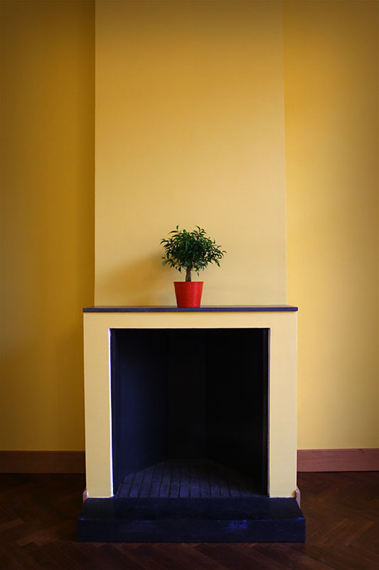 Yellow Wall and Plant