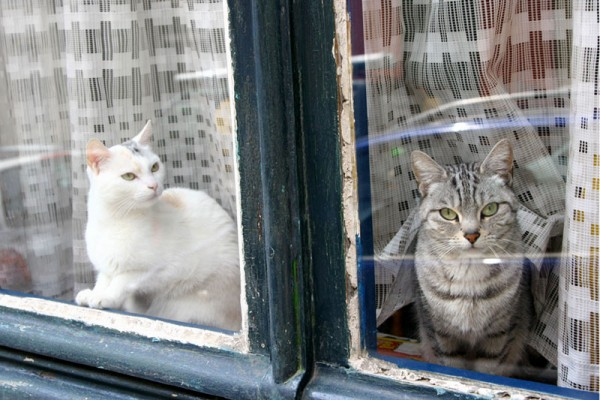 The Cats of Ixelle