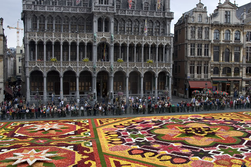 Brussels Tapis De Fleur Flowers Grand Place