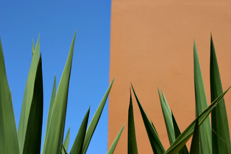 Blue Orange Palm Abstract