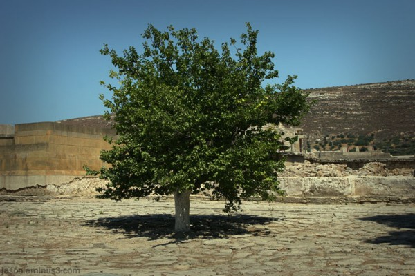 Knossos tree ruins knowledge
