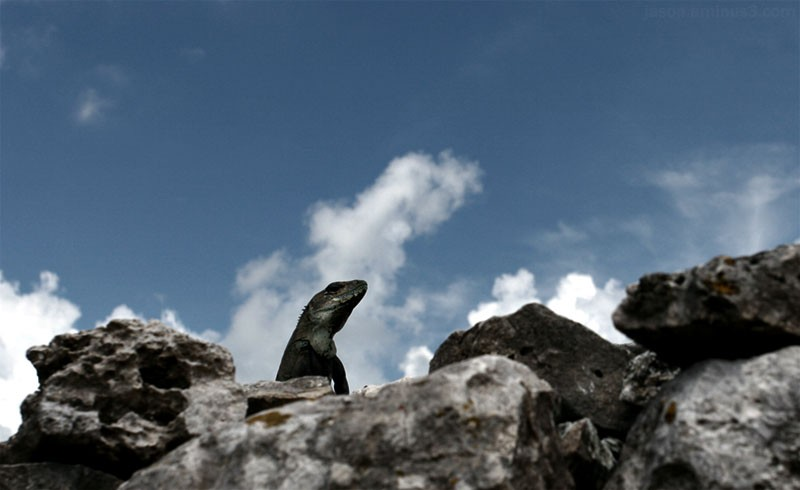 Mexico Iguana Rocks Sky Clouds