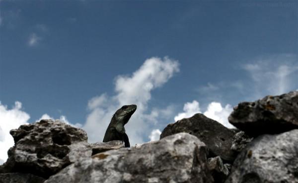 Mexico Iguana Rocks Sky Clouds