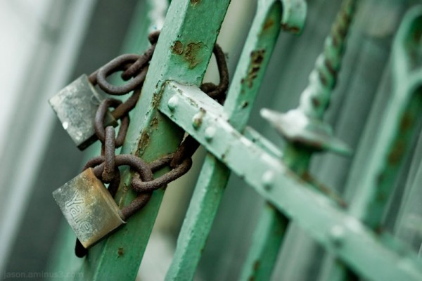 rusty padlocks chain green fence