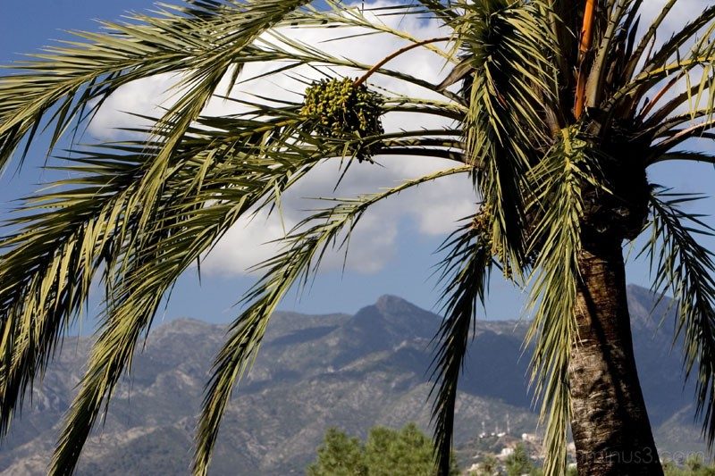 palm tree with mountains