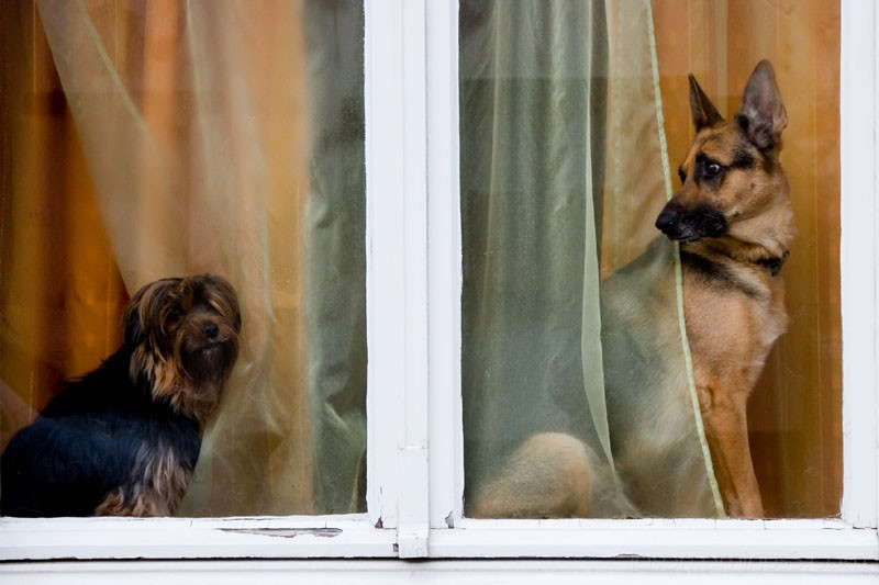 window dogs Belgium