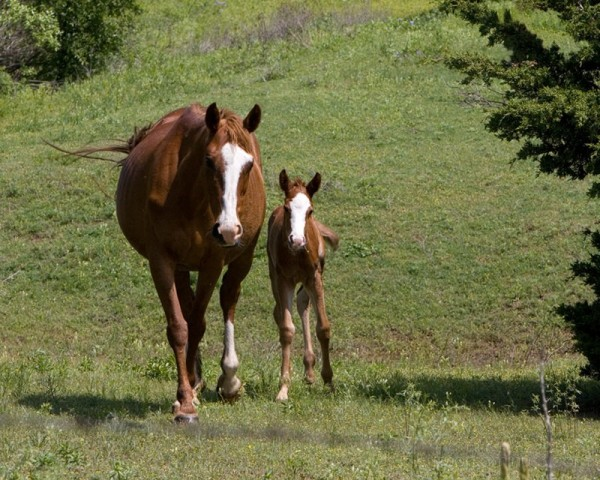 mother horse and foal