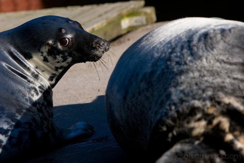 Seal Eyes
