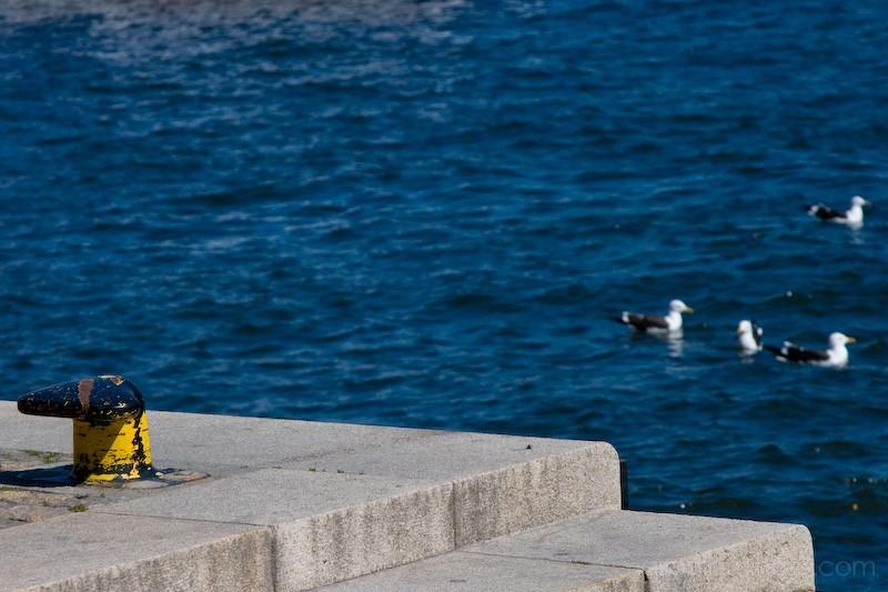 seagull dock