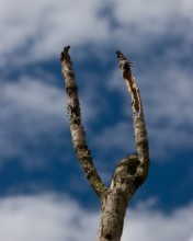 skinny fists tree