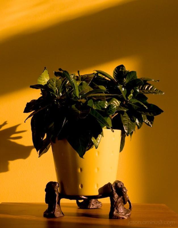 Yellow Pot