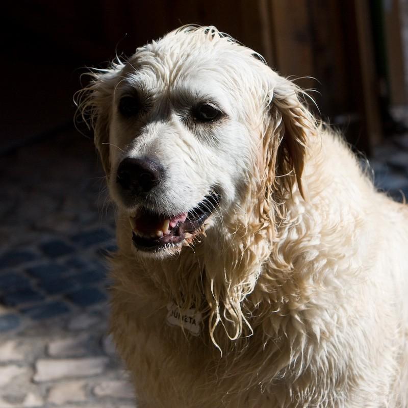 wet dog at Praia de Ribeira d