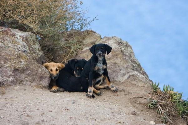 puppy pack Greece